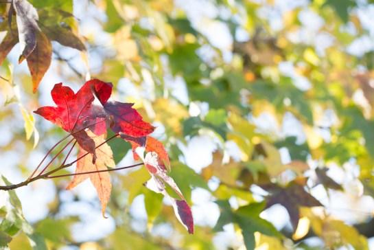 photo: autumn, colourful, green, leaves, orange, purple, Red, sky, tree