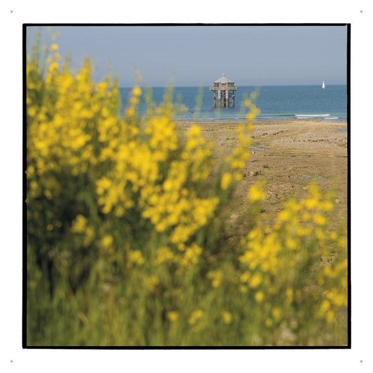 Pascal Bernard - La Rochelle Nature