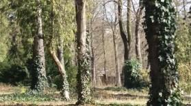 Arboretum der Baumpark in Plauen 27- März 2020 7
