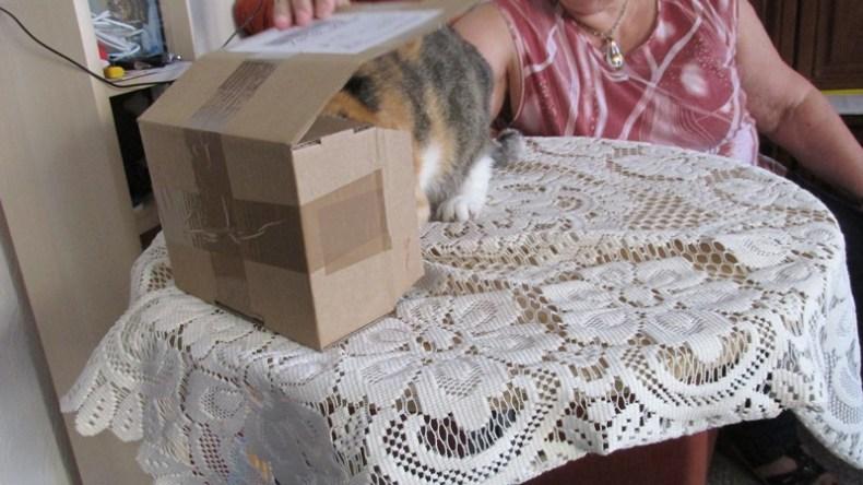 Kistenkatze-