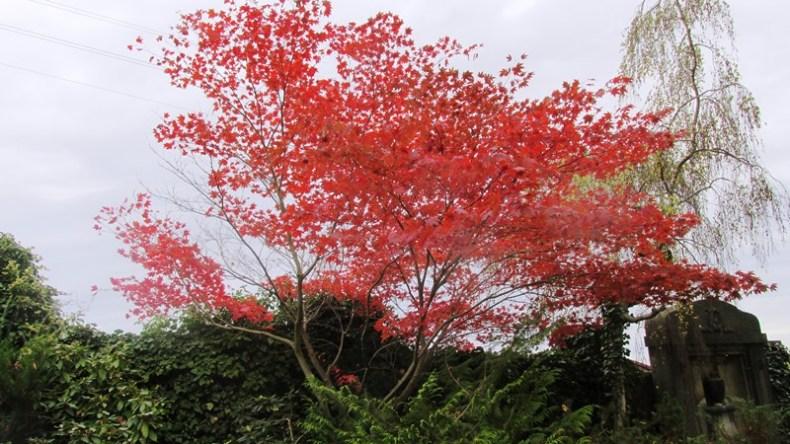 Das Arboretum im Oktober