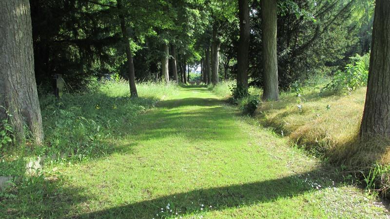 Arboretum der Baumpark in Plauen 27- Juni 2021