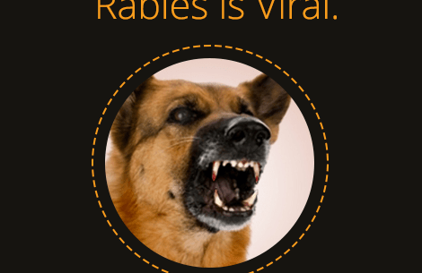 How To Protect from Rabies virus