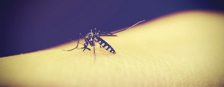 5 Ways to Increase Platelet Counts in Dengue fever