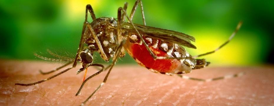 Symptoms of Zika Virus