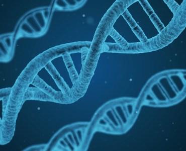 common genetic disorders