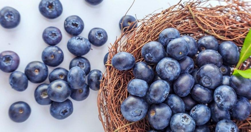 blueberries are brain food