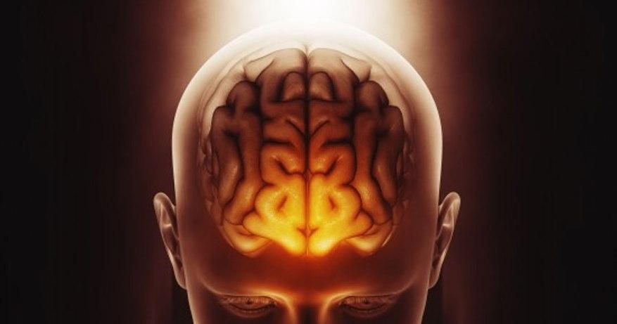 probiotics boost brain functioning