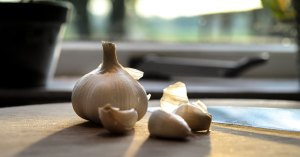 garlic for ear infections