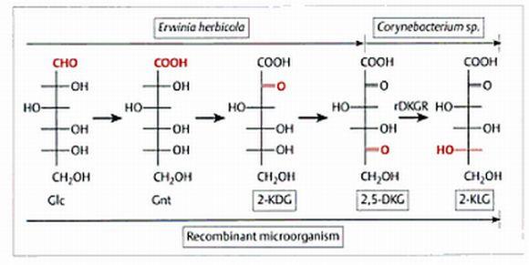 VitaminaC_Bioproductos_Biotecnologia_Maria_Iranzo_Biotec