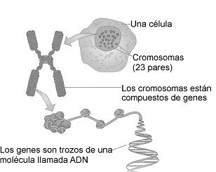 Sarcoma_De_Ewing_Cancer_Maria_Iranzo_Biotec