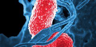 Cáncer_Colon_Fusobacterium_nucleatum_Maria_Iranzo_Biotecnologia