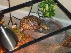 Lola bañandose