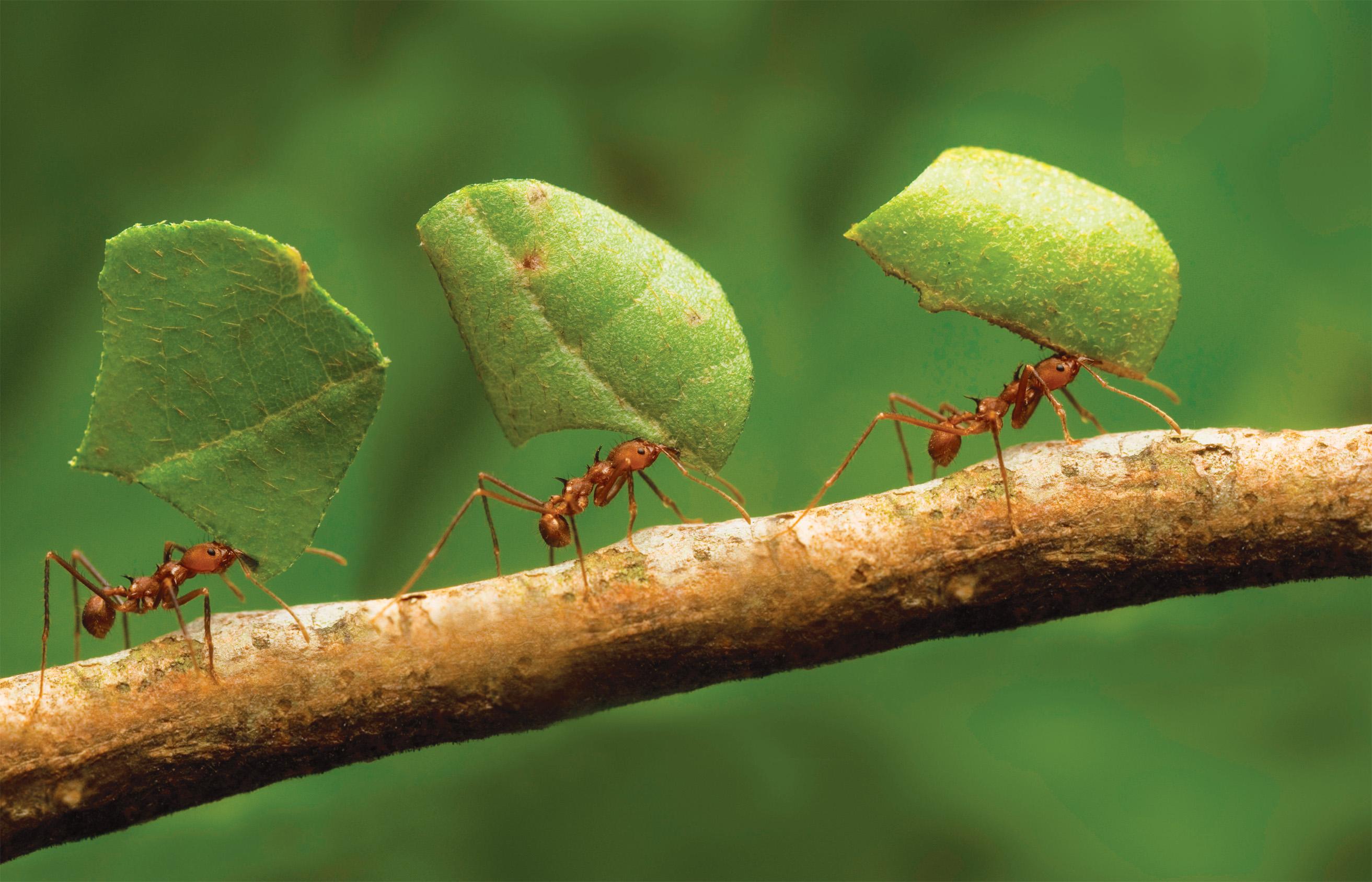 may 3rd - ants : sketchdaily