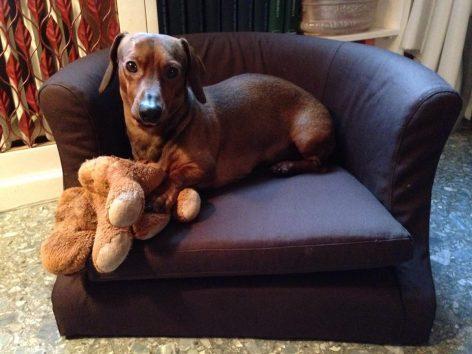 Rudy e il suo divanetto cuccia marrone