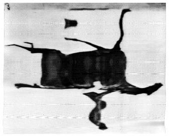 Reflection - Horse at Gallop