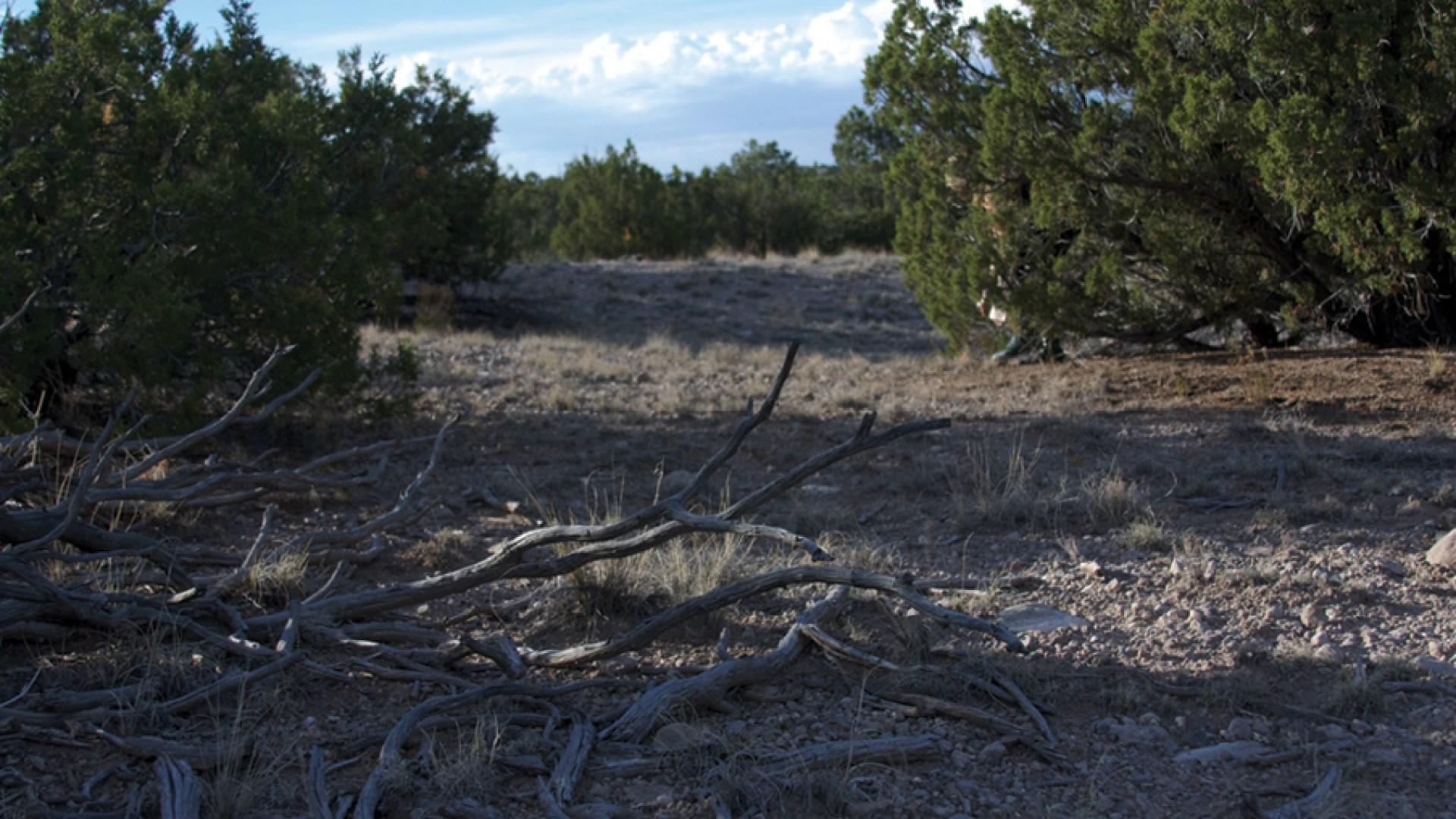 Landscape Studies: New Mexico 15