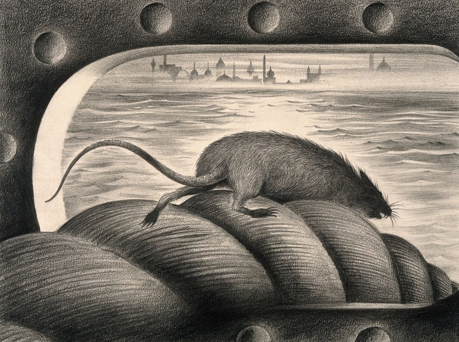 Still from Dis-Ease: Drawing of plague-carrying rat made by Albert Lloyd Tarter for an unproduced film in the 1940s (Wellcome Collection)