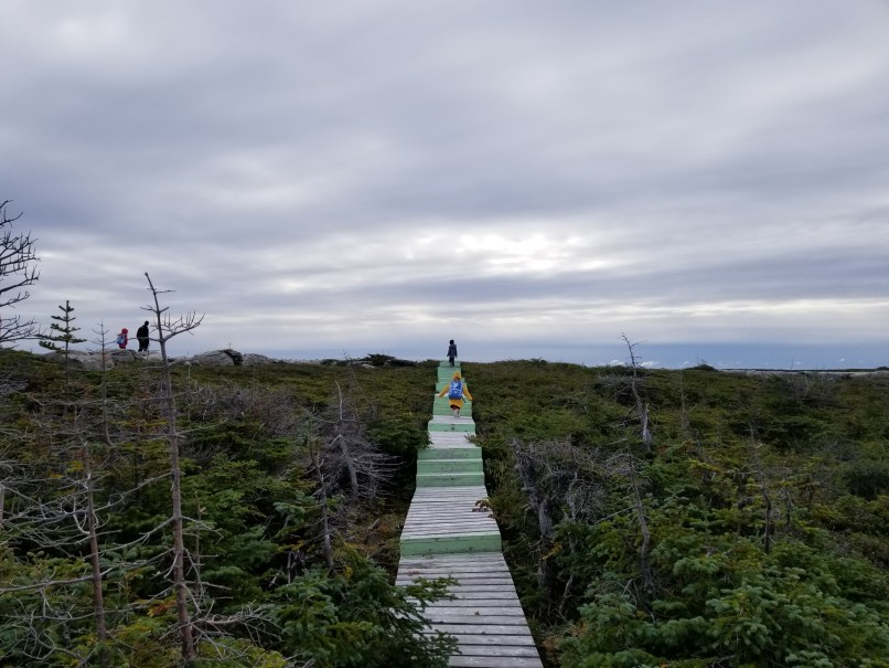Limestone Barrens, Flowers Cove, Newfoundland