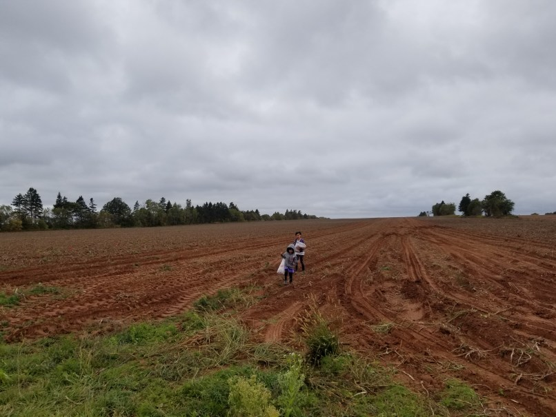 2 children in a potato field