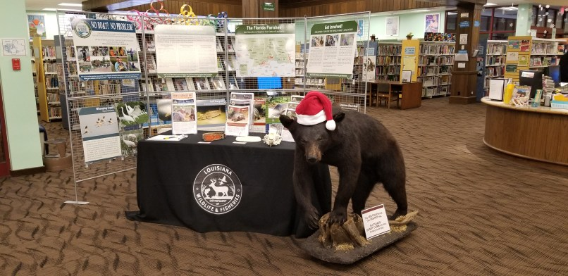 Black Bear Safety display at the Slidell Public Library. A table with a black table cloth displays several pamphlets, and a black bear taxidermy display stands beside the table.
