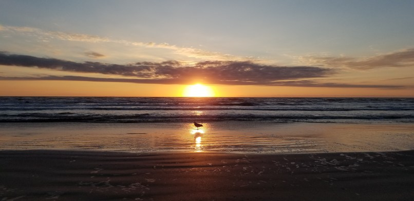 Seagull in the reflection of the sunrise, in front of the water on Padre Island National Seashore