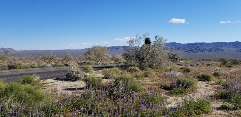 Mountains, trees and rocks at joshua tree national park