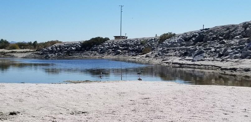 birds in a tide pool at the Salton Sea