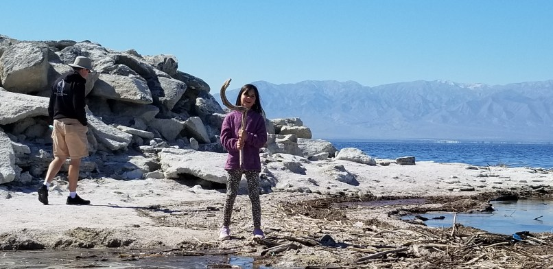 Girl holds up a dead branch in the shape of Maui's hook. Behind her are rocks, the Salton Sea, and mountains.