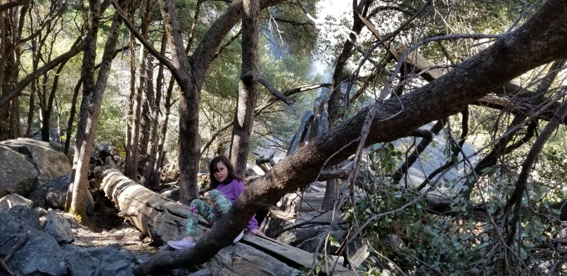 9-year-old girl climbing a log at Yosemite National Park