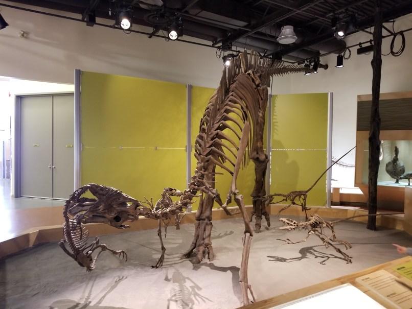 Dinosaur Provincial Park display shows small carnivorousdinosaurs attacking a large herbivourous dinosaur.