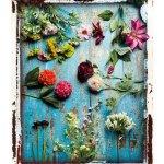 [HELSE] BIBLIOTEKET: Urter og urtemedisin