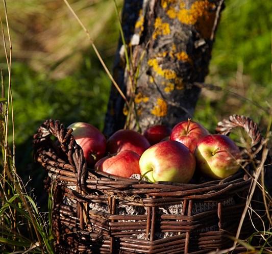 Sunne-oppskrifter-med-eple-på-den-norske-epledagen
