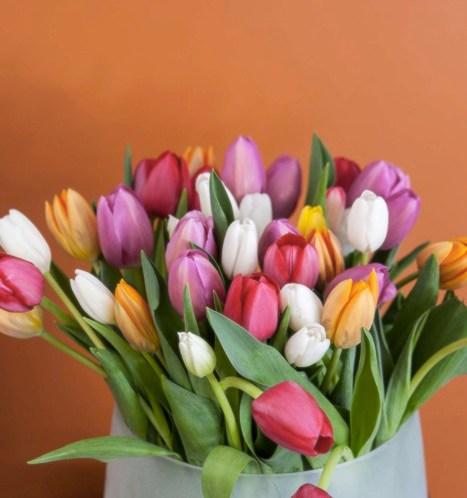 Stelletips for tulipaner