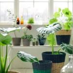 Planter i sol eller skygge?