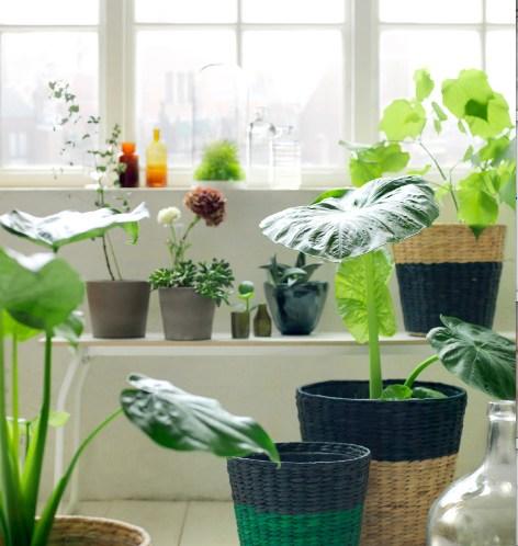 Tips til stell av planter. Plassering i sol eller skygge?