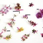 Lettstelte, eksklusive, blomstringsvillige. En liten guide til orkidéer.