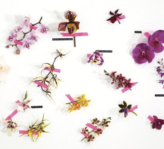 GUIDE Orkideer
