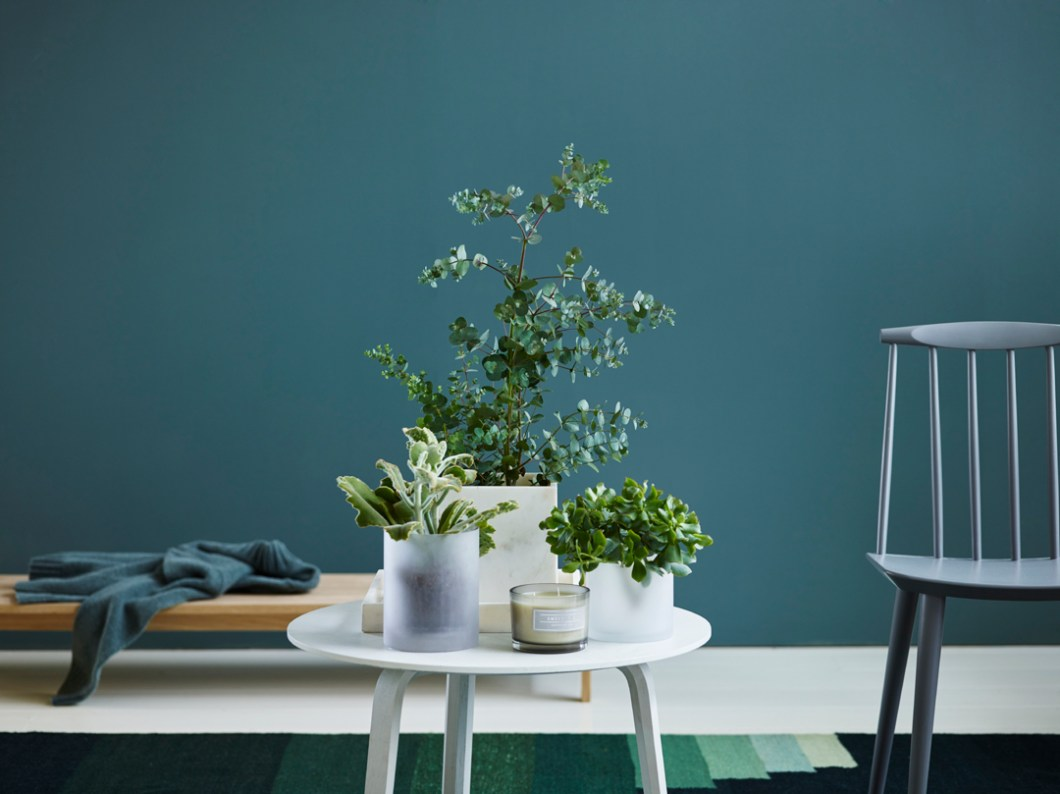 INTERIØR interiørtips, planter, blogg, blomster, trender