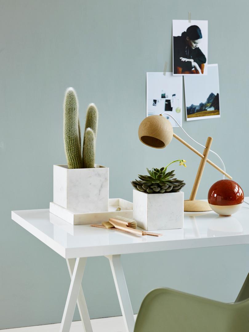 INTERIØR interiørtips, planter, blogg, sukkulenter