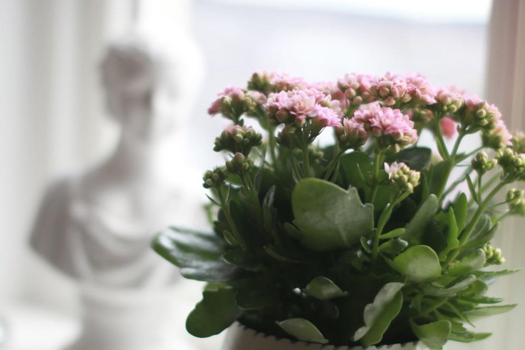 Mariannes blogg - blomster og planter