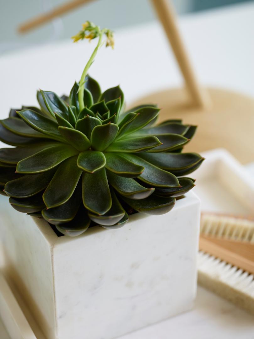 interiørtips,-DIY,-blogg,-planter,-blogg,-blomster,-sukkulenter