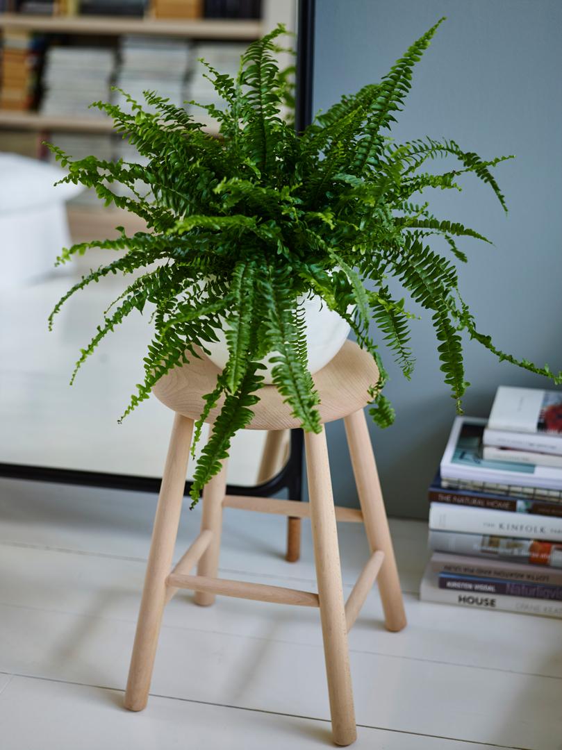 interiørtips,-DIY,-blogg,-planter,-interiørblogg