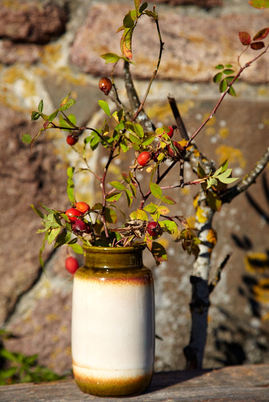 How to use rosehip in food and deocorations BLOG: mariannedebourg.no