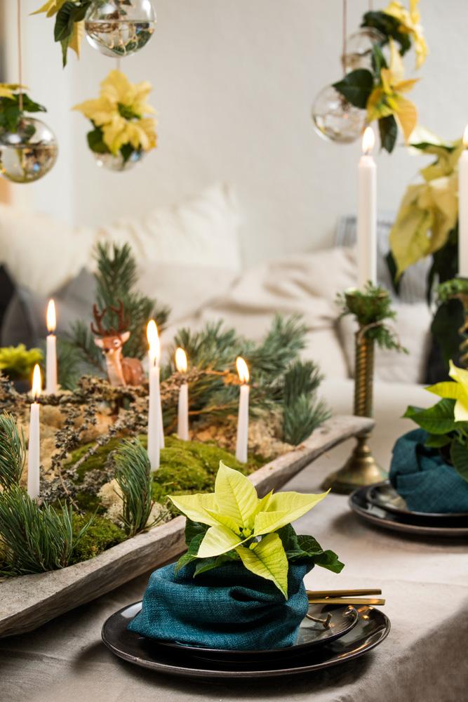 Julebord med blomsterdekorasjoner av hvite julestjerner