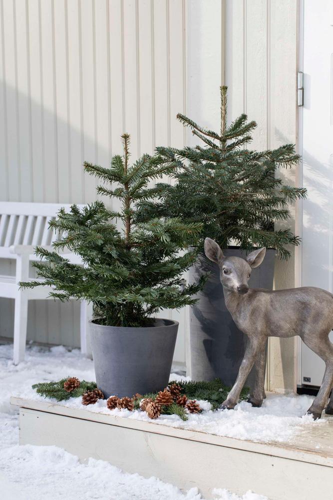 Julepyntet inngangsparti med gran, dådyr og barbunt.
