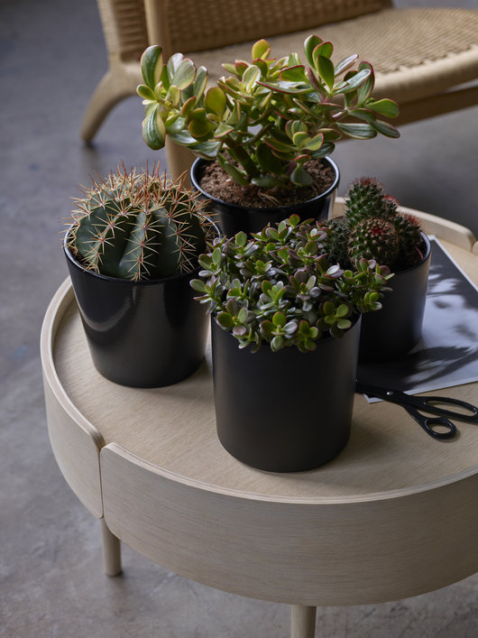 Sukkulenter og kaktuser