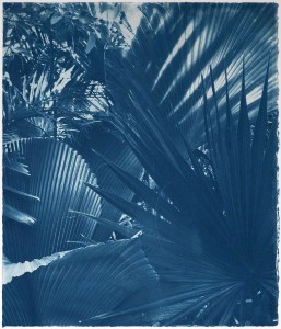 artwork of palm leaves