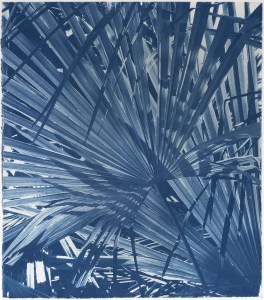 Palm leaf cyanotype