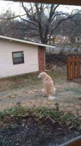 The sun rose over the house behind our yard. Here's Shannon on his version of Pride Rock.